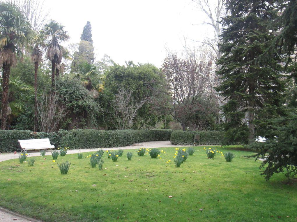 Jardin Botanique Royal - Madrid