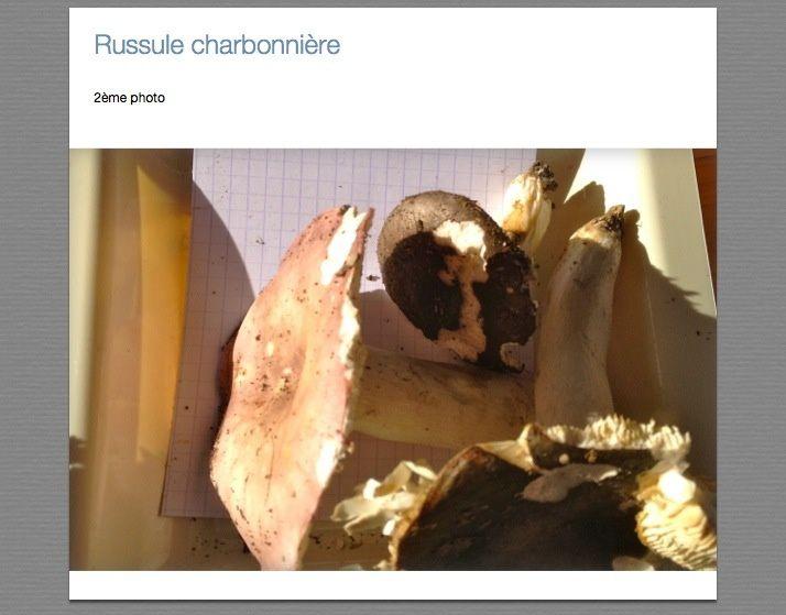 Russules