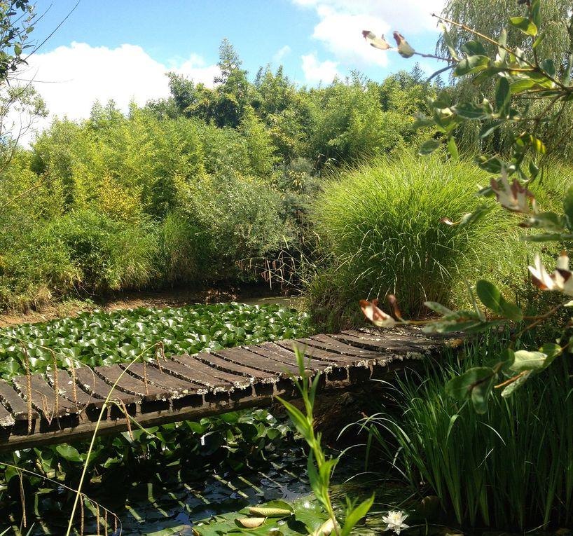 La végétation devenait trop luxuriante. (6 photos)