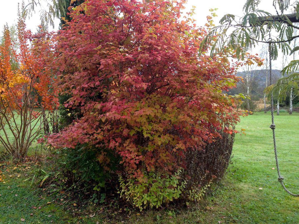 Viburnum opulus -  25 avril, 1er et 5 mai et 9 novembre (6 photos)