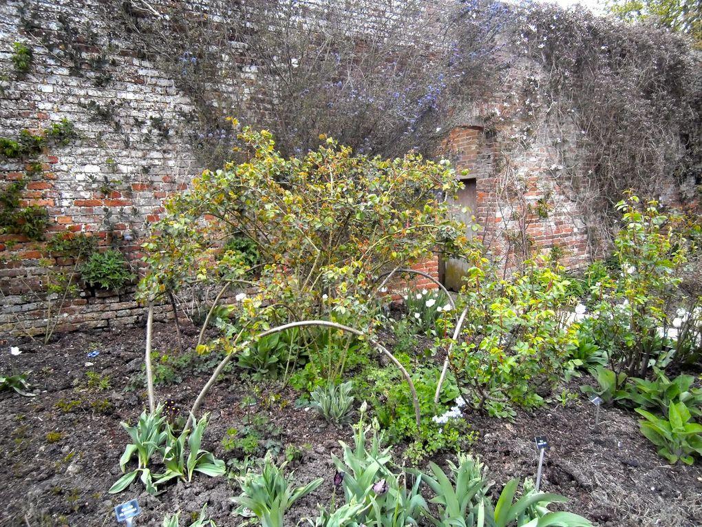 Support pour les rosiers Bourbon 'Madame LAuriol de Barny' et 'Variegata di Bologna' - The Rose Garden