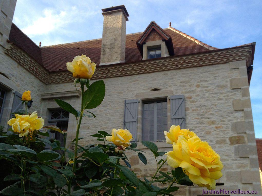 Secteur centre du Jardin de Frescati : boules de buis et rosiers 'Michelangelo'