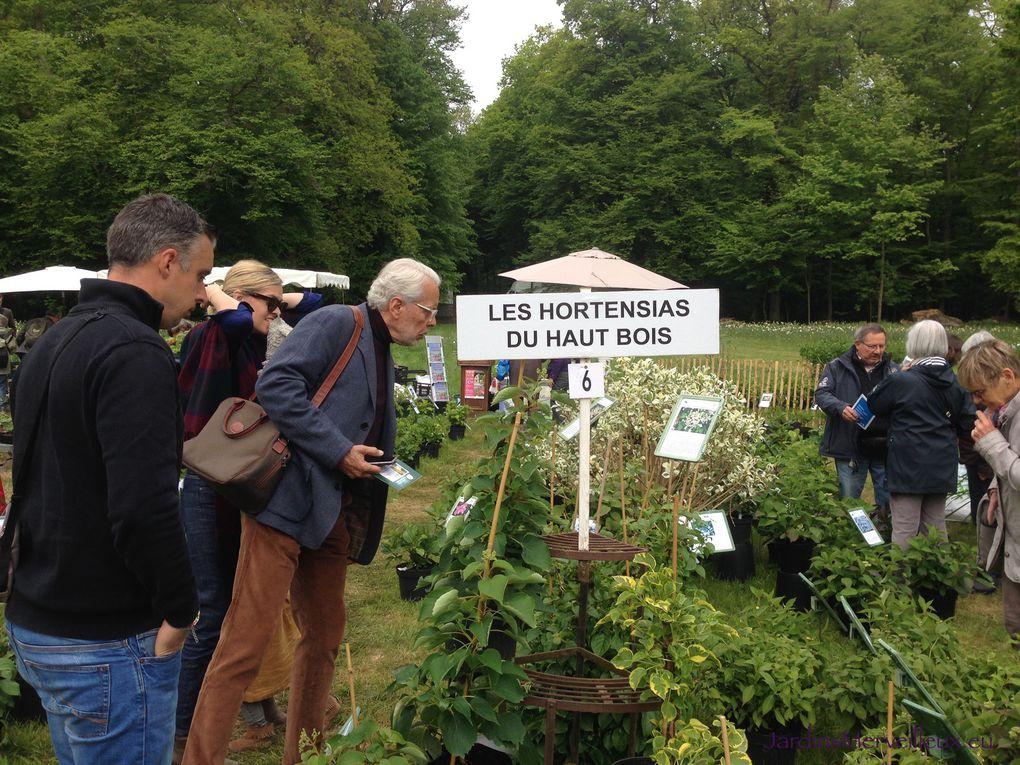 """Stand """"Les Hortensias du Haut Bois"""" - 2 photos"""