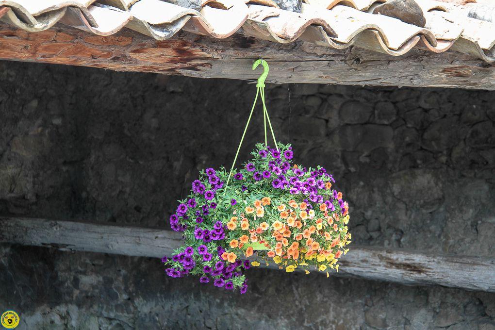 La Mure Argens :  Le fleurissement
