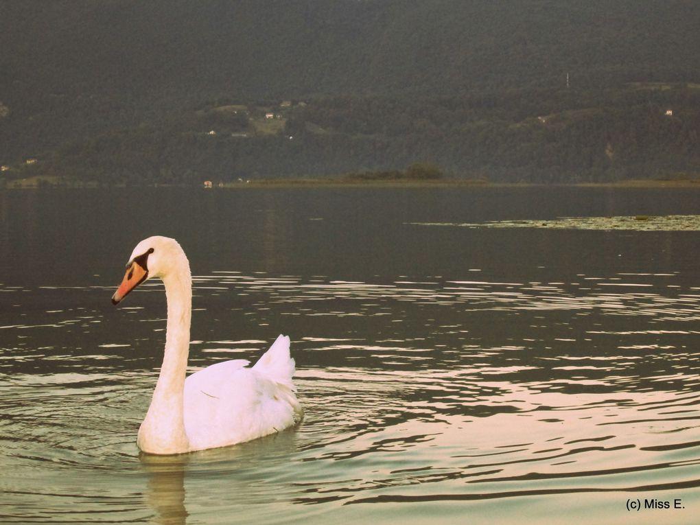 Coucher de soleil au lac d'Aiguebelette
