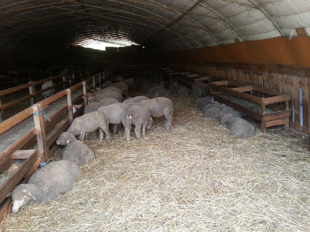 Visite de ferme à Bauduen