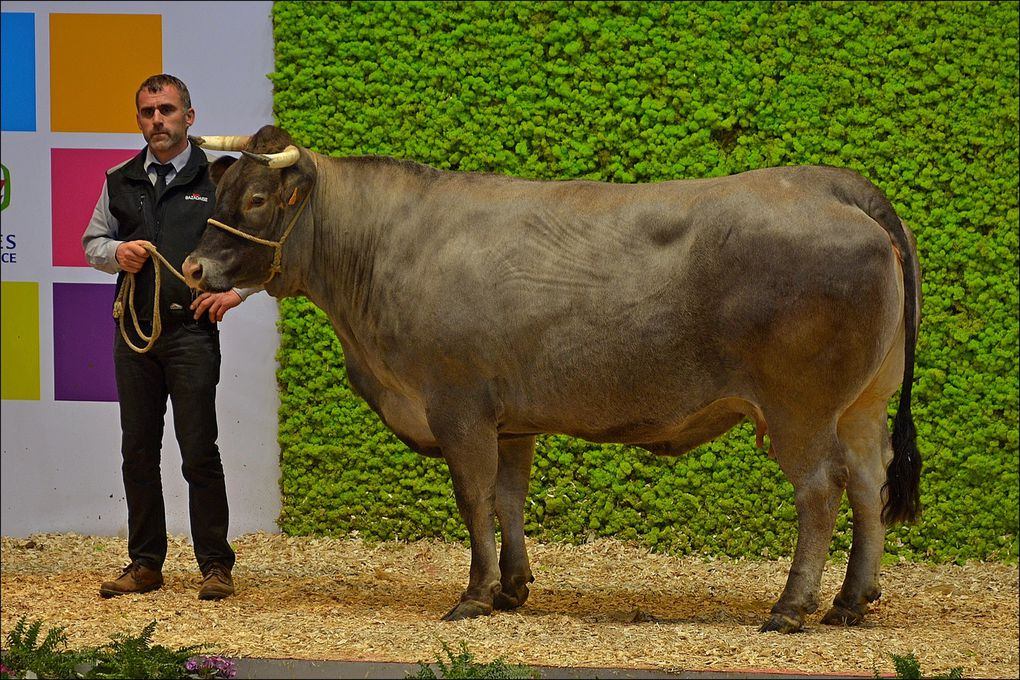 Salon de l 39 agriculture 2016 passion photo pascal for Porte h salon de l agriculture