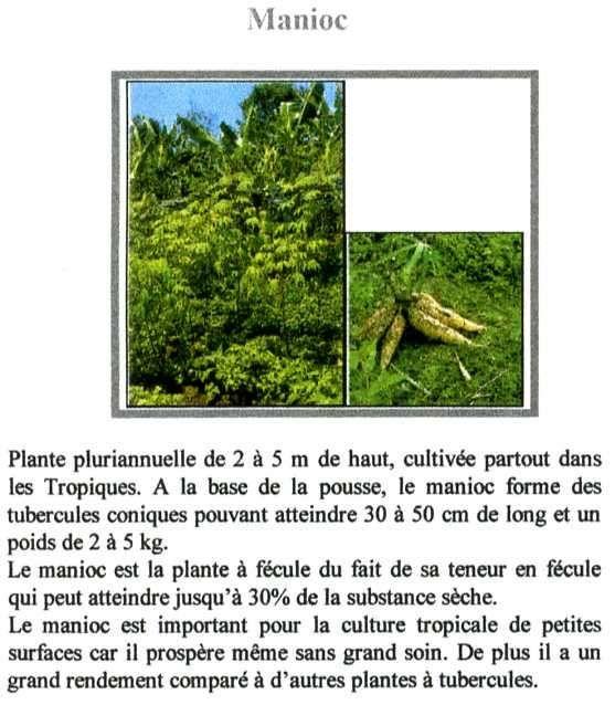 Plantes du Fouta Djalon.