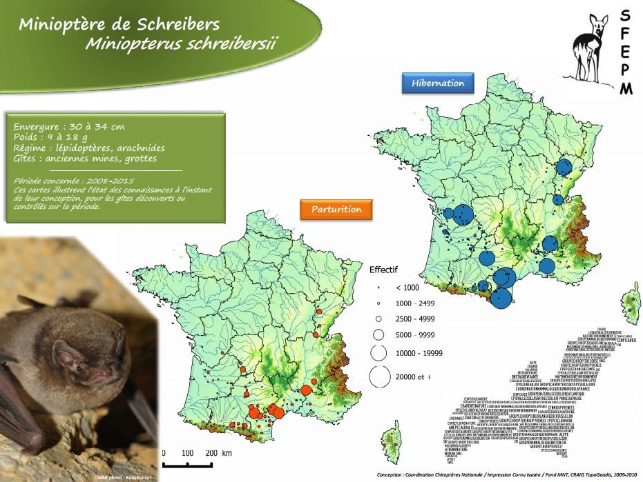 Rencontres chiropteres bourges 2016