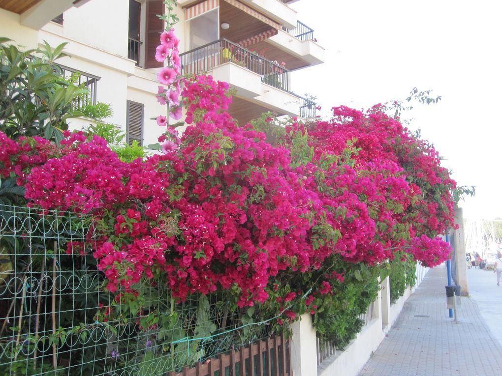 Baléares, les murs, les fleurs et le reste ...