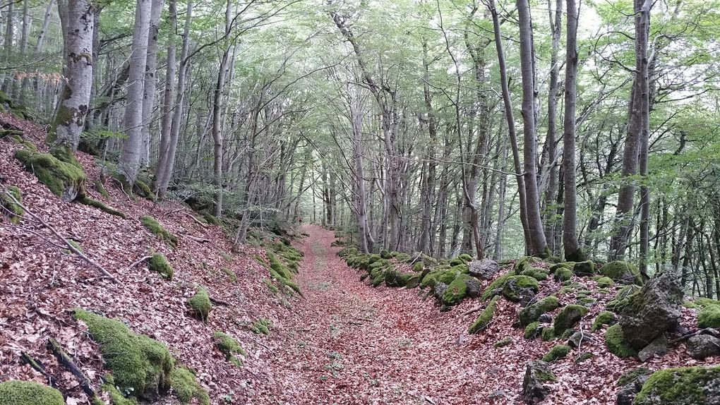 Depuis le hameau de la Vergnette, un ancien chemin caladé nous conduit à travers bois, au village de Vigouroux.