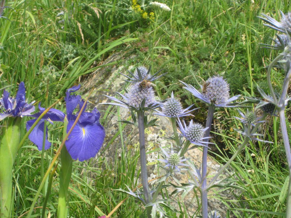 les fleurs qui ont ralenti notre pas