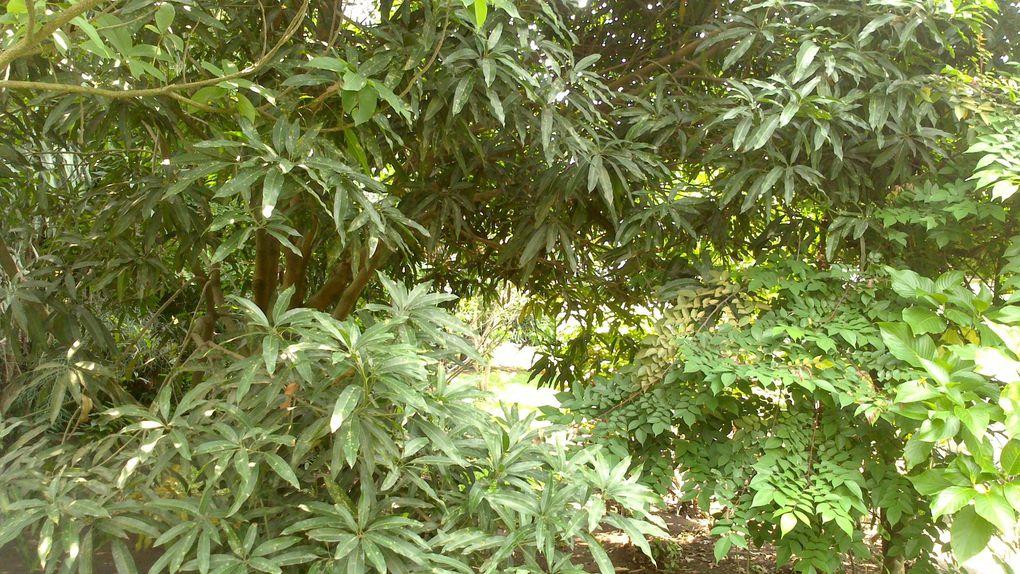 Jardin d'un administré de la commune de Ngaliema (Kinshasa)