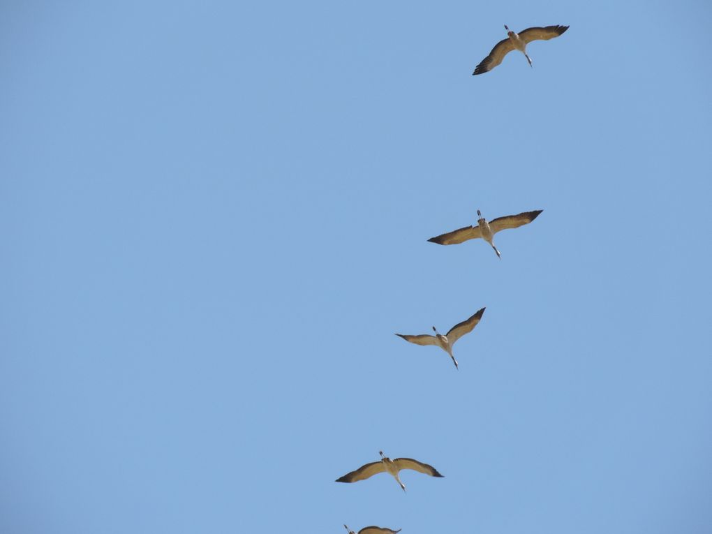 à tire d'ailes, à l'endroit, à l'envers, en vol, au vent, ... toutes les plumes sont dans la nature.