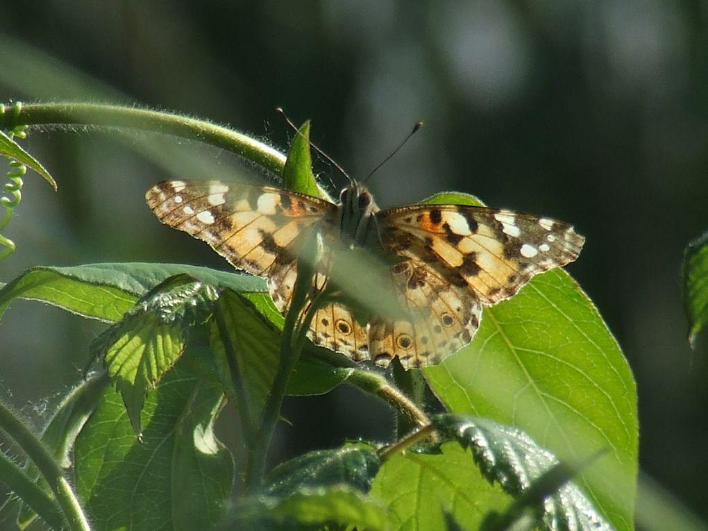 Même les petites bêtes sont natur'ailes !