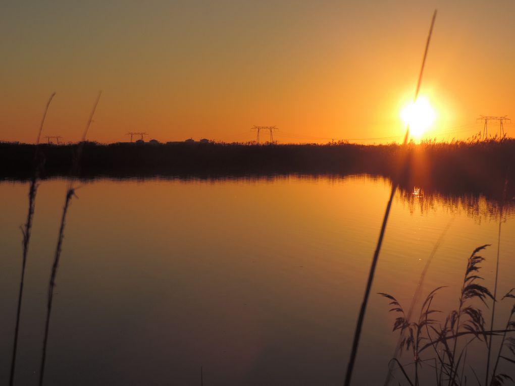 Crépuscule sur les marais