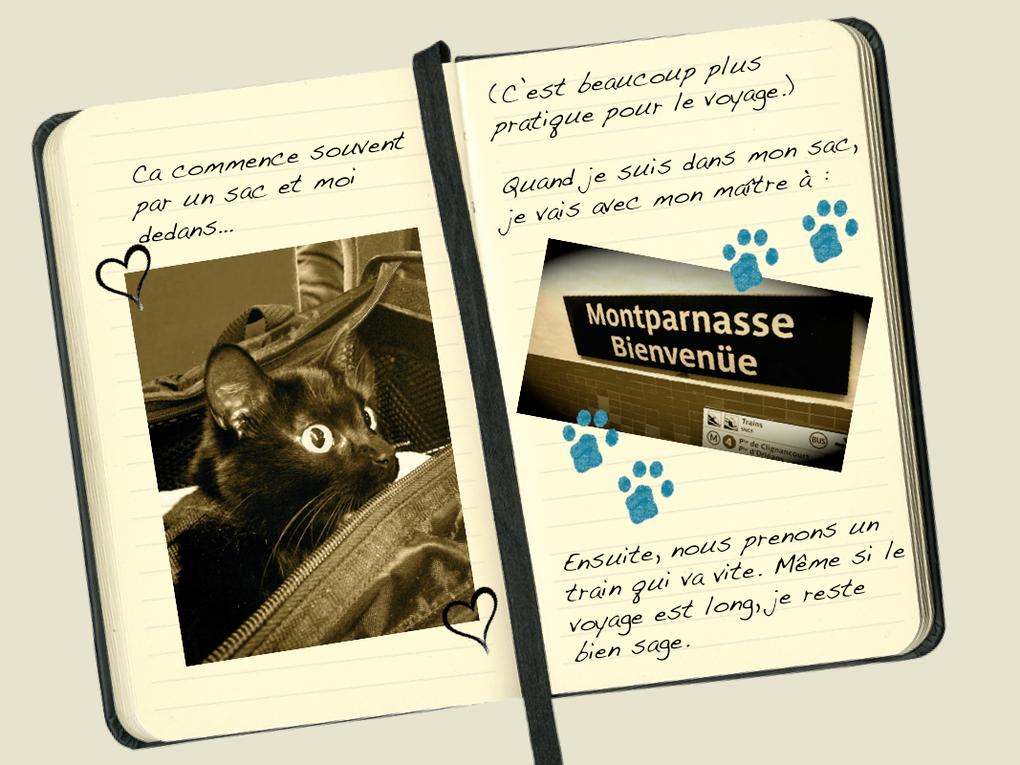 Le blog du chat #6 Le week-end