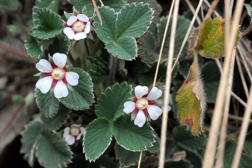Les fleurs de Jean-Louis