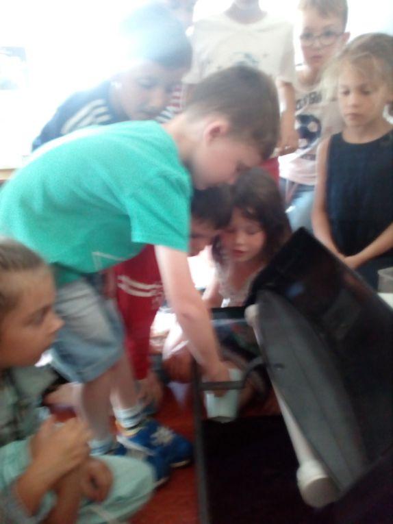 projet escargot pour les classes de maternelle -CP