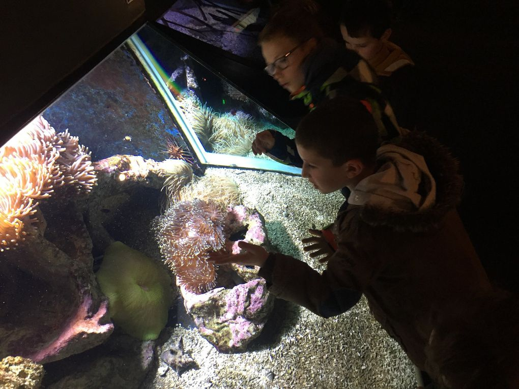 A la découverte du monde des crevettes
