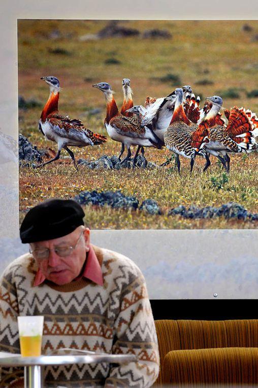 FIFO 2012 : détournements de photos d'oiseaux