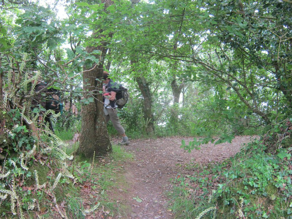 à cache-cache dans la forêt