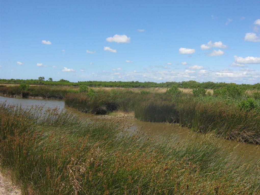 les marais, de très beaux paysages à mon goût bien sûr