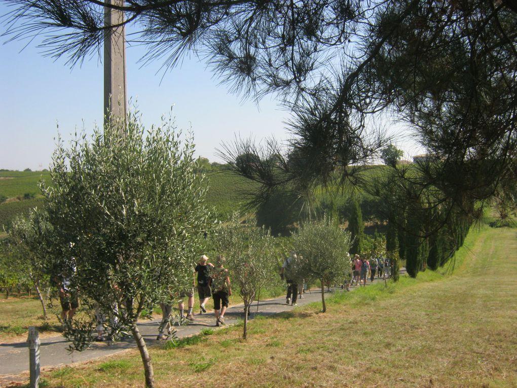 Le Château de La Grave et sa belle allée de cyprès
