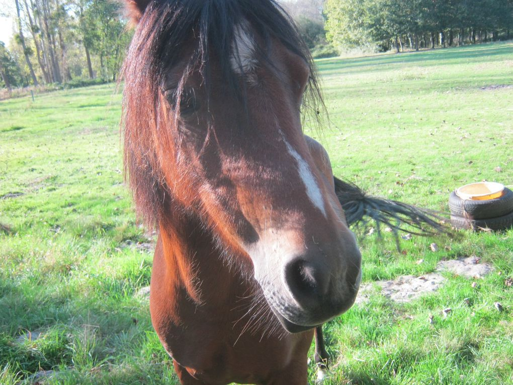 deux beaux chevaux, sur la dernière photo prise de très près il me lèche l'épaule, Michel il n'en veut pas de ta pomme, il connait l'histoire de Blanche Neige, il se méfie hihihi