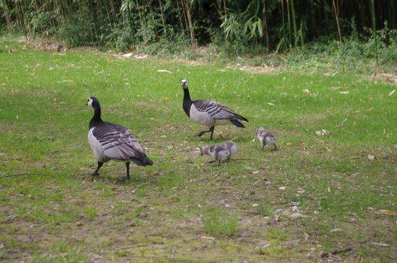 Parc ornithologique de Villars-lès-Dombes