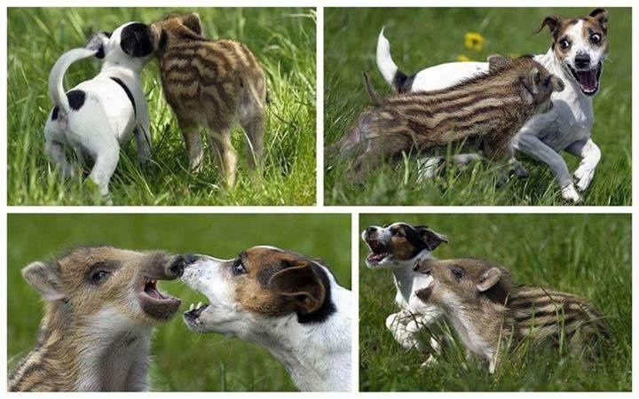 L 214 Ethique et Animaux, une organisation de défense des animaux