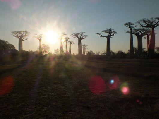 L'allée des baobobs, un passage clé, pour toutes les formes de voyage...