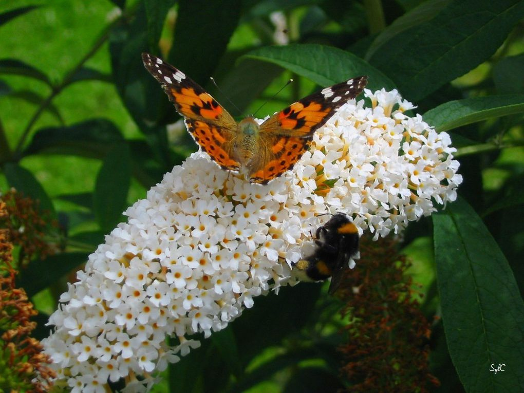Insectes, papillons...
