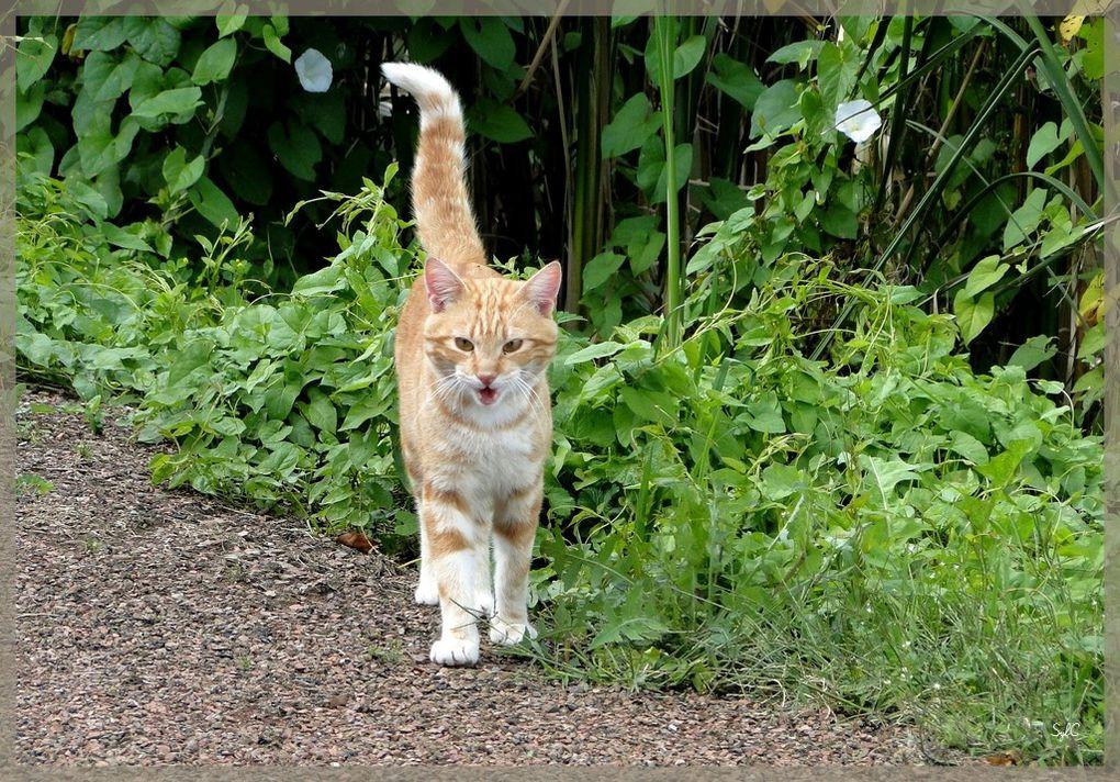 Divers chats... ceux de ma maman... et ceux rencontrés durant mes balades !