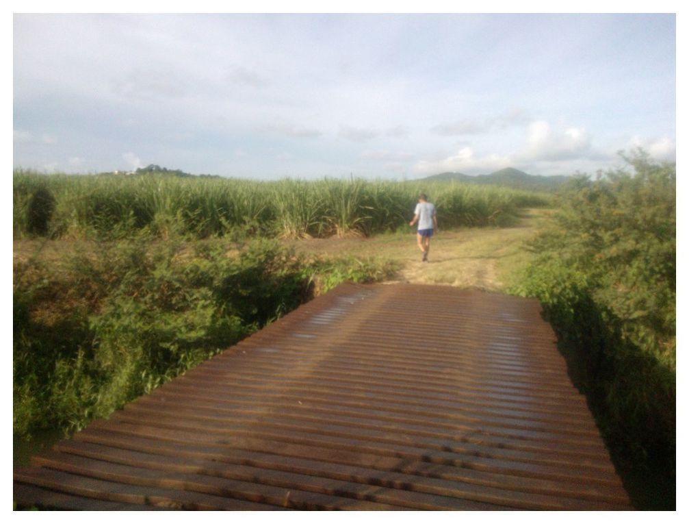 Photos de notre parcours footing.