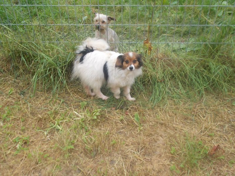 ADOPTION CHIENS - FANNY, GELLINE &amp&#x3B; GLACON