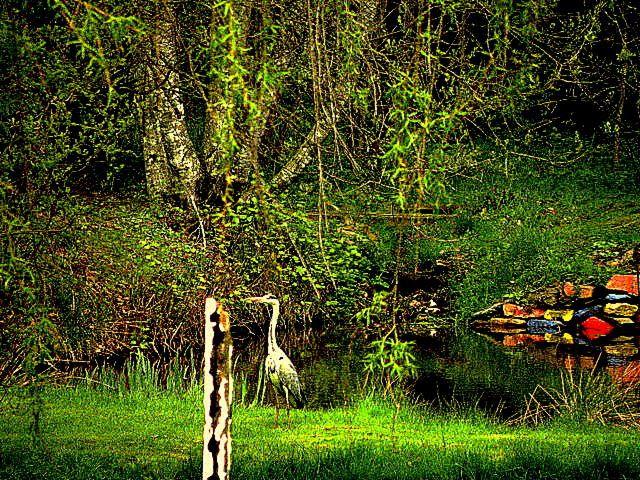 Aménagement de mes 33 ares de terrain, creusement des étangs, plantation des arbres, installation des totems, murs de pierre peints à l'huile