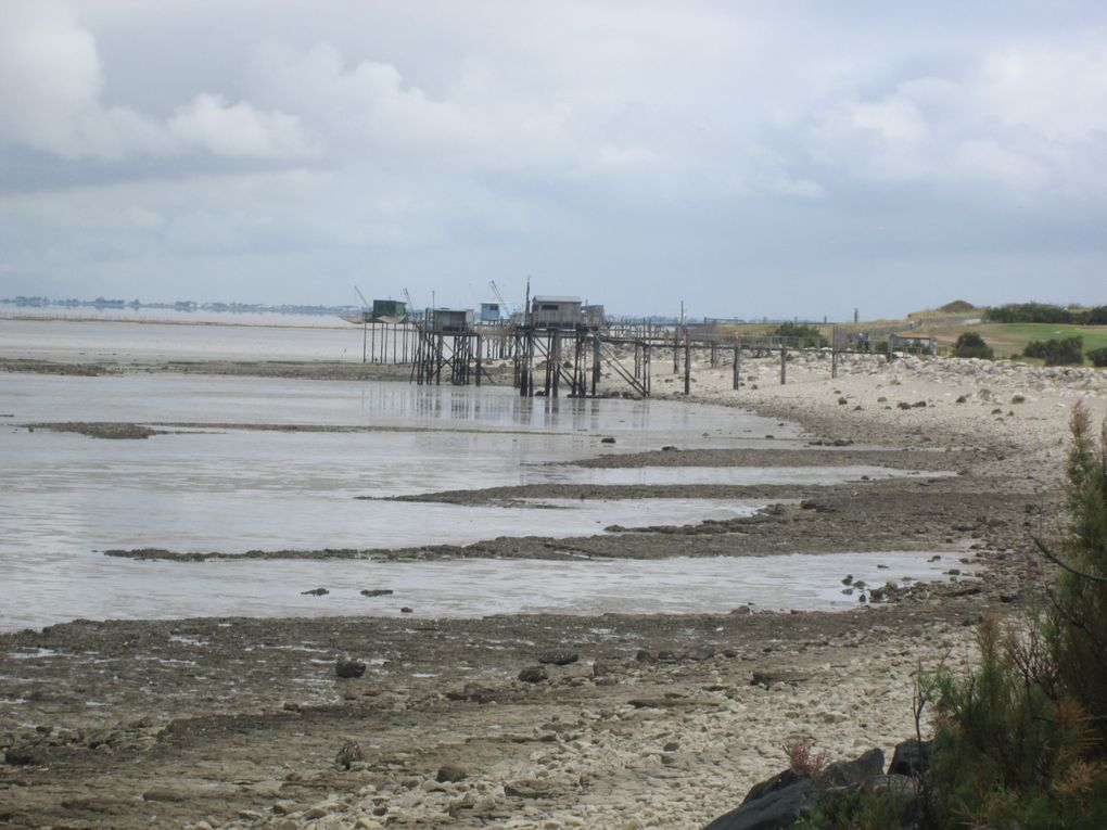 Moments de promenade dominicale ........ Balade côtière à la baie de l'Aiguillon.