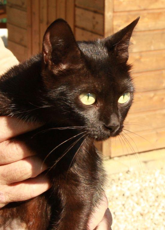 PEPITA (née en janvier 2011) - Adoptée