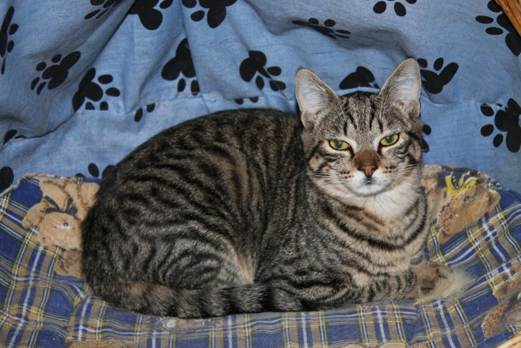 CHANGI (mâle, né en juin 2012) - Adopté
