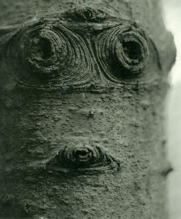 Les masques d'écorces de JD Burton
