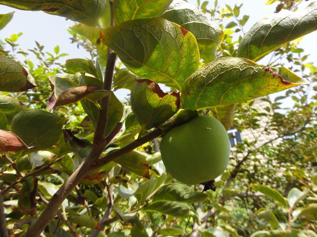 Medjlaya (Liban): Le &quot&#x3B;Jardin extraordinaire&quot&#x3B; du Père Joseph... nouvelle saison !