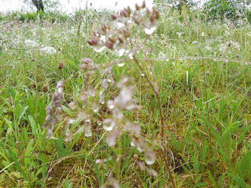 Cauterets au mois de mai.... paysages et fleurs sauvages !