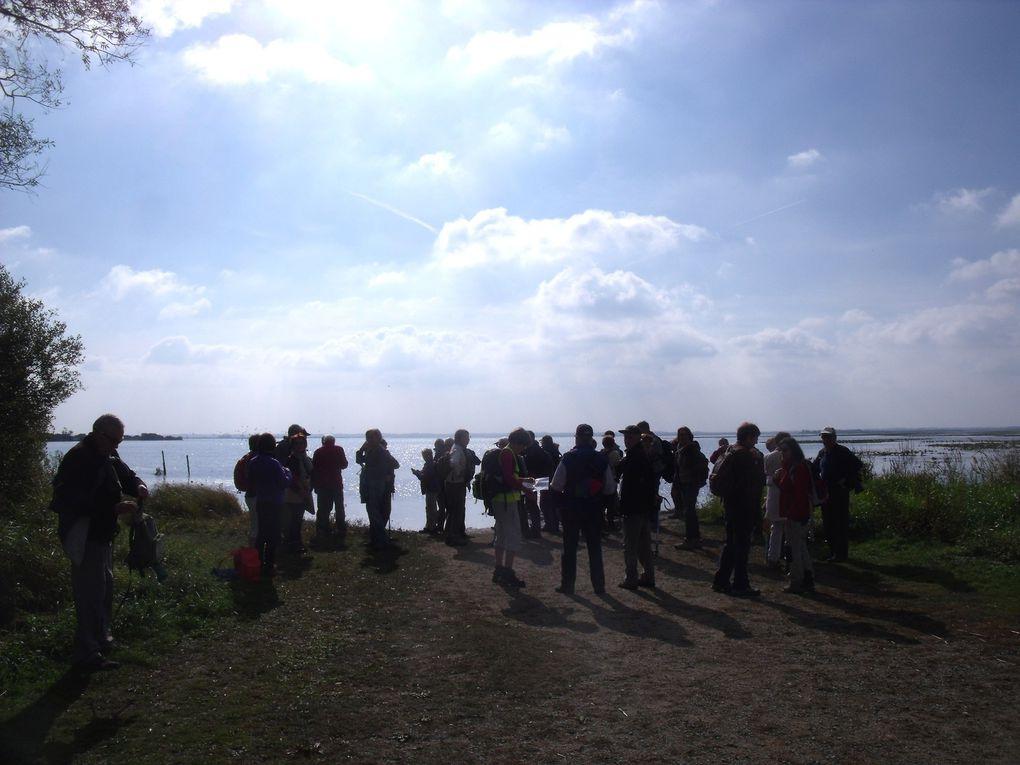 Les &quot&#x3B;12 Km&quot&#x3B; au Lac de Grand lieu