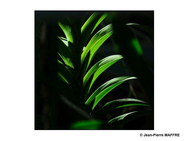 Les arbres qui filtrent les rayons du soleil et les restituent sous la forme de spots lumineux nous donnent des éclairages qu'on pourrait obtenir en studio.