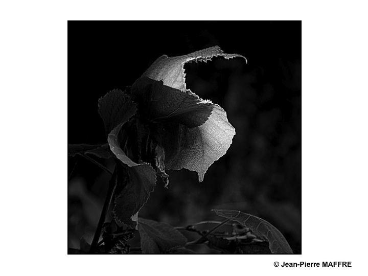 Comment ne pas résister à la pureté et au dépouillement du noir et blanc.