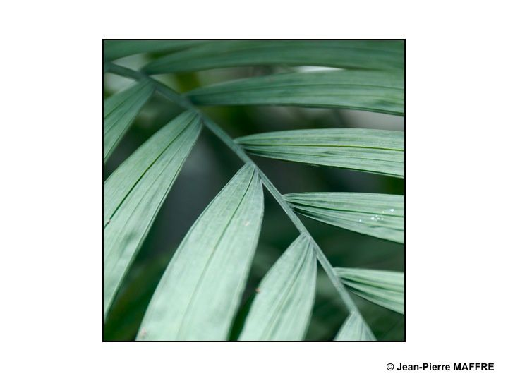 Pour qu'il y ait des plantes, il faut du soleil. Pour les magnifier, encore et toujours du soleil.