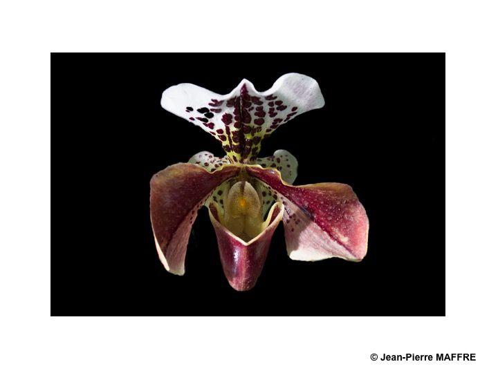 Les orchidées vues pour elles-mêmes dénuées de tout leur environnement qui dissimule leur beauté.