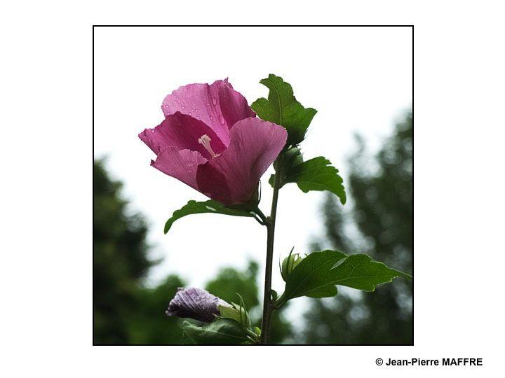 Merci à tous ces jardiniers anonymes qui, par leur passion des beautés de la nature, embellissent notre vie.