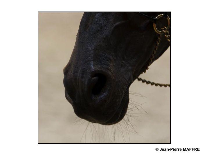 Comment ne pas résister au plaisir de photographier les chevaux considérés comme la plus noble conquête de l'homme.